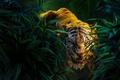 Картинка King, Boy, Young man, Apes, Baloom, Kaa, The, The Jungle Book, Shere Khan, Avaza, Tiger, ...