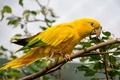 Картинка попугай, птица, природа