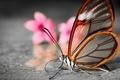 Картинка размытость, полупрозрачные, цветы, бабочка, крылышки