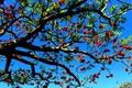 Картинка дерево, небо, ветки, цветы
