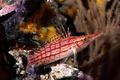 Картинка Рыба, море, дайвинг, кораллы