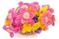 Картинка цветы, фон, корзинка, белый, тюльпаны, нарциссы