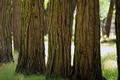 Картинка деревья, парк, trees, трава nature