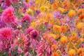 Картинка цветы, лепестки, луг, сад