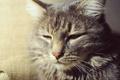Картинка кошка, животные, котенок, кот
