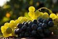 Картинка свет, ягоды, виноград, гроздь, кисть