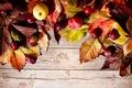 Картинка осень, apples, leaves, яблоки, autumn, листья