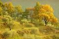 Картинка Природа, Трава, Осень, Деревья