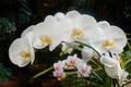 Картинка цветы, лист, широкоформатные, широкоэкранные, widescreen, обои на рабочий стол, обои, цветок, листья, HD wallpapers, полноэкранные, ...