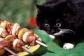 Картинка фарт, шашлык, кот