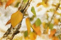 Картинка листья, осень, текстура