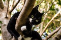 Картинка cat, leaves, top, tree, white, branches, black, green, brown