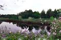Картинка небо, озеро, вечер, лебеди, Заря