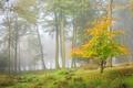 Картинка дерево, осень, лес
