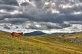 Картинка холмы, лошадь, Облака