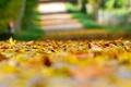 Картинка осень, листья, макро, фон, земля, widescreen, обои, желтые листья, размытие, размытость, wallpaper, листочки, широкоформатные, листики, ...