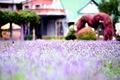 Картинка поле, фиолетовый, макро, цветы, фон, widescreen, обои, размытие, wallpaper, цветочки, flower, широкоформатные, flowers, background, macro, ...