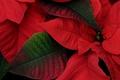 Картинка цвет, природа, краски, растение, листья
