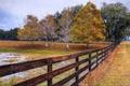 Картинка картина, осень, природа