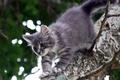 Картинка дерево, катейка, серый, кошки