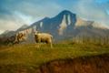 Картинка небо, трава, горы, овца