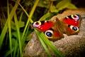 Картинка макро, бабочка, природа, камень, трава, насекомые