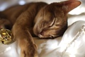 Картинка кошка, кот, новый год, сон, шарик, спит, ткань, гирлянда