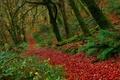 Картинка Exmoor National Park, Buckethole Woods, Национальный парк Эксмур, деревья, Англия, листья, лес, осень, England