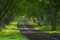 Картинка путь, настроения, природа, дорога, деревья, фото природы, дерево, настроение, пути, дороги