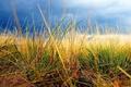 Картинка небо, трава, осень