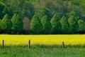Картинка поле, деревья, цветы, весна, Nature, trees, field, жёлтые, spring, yellow flowers