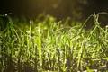 Картинка роса, блики, трава, капли