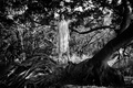 Картинка корни, Меган Коллисон, деревья, фотосессия, Meghan Collison, лес, Intermission
