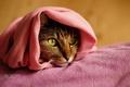Картинка кот, глаза, полотенце, кошка