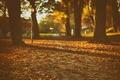 Картинка shadows, autumn, sunlight, lamp posts, trees, park