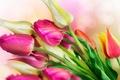 Картинка ярко, цветы, тюльпаны, капли