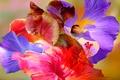 Картинка цветы, лепестки, краски, линии, абстракция
