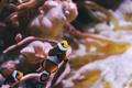 Картинка рыбы, клоун, аквариум, рыбки