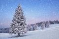 Картинка елка, зима, снег, природа, время года, пейзаж
