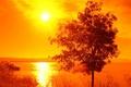 Картинка лето, солнце, свет, отражение, восход