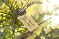 Картинка макро, ветка, свет, жизнь, цитата, листья, листок, надежда, зелень, настроение, green, солнце