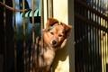 Картинка собака, забор, друг