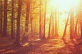 Картинка осень, лес, трава, листья, солнце, свет, деревья, природа