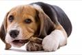Картинка game, dog, mood, Animals