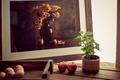 Картинка обои от lolita777, горшочек, яйца, натюрморт, рамка, фотография, растение, яблоки