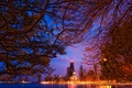 Картинка небоскребы, сша, Chicago, чикаго, огни, ночь, америка, ветки, пейзаж
