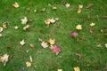 Картинка осень, трава, листья, листва, landscape, nature, autumn, view, leaves, fscenery
