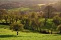 Картинка поля, зелень, природа, деревья, склоны, весна