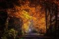 Картинка аллея, Ildiko Neer, парк, осень, дорога