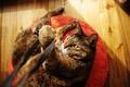 Картинка кошка, игра, лапа